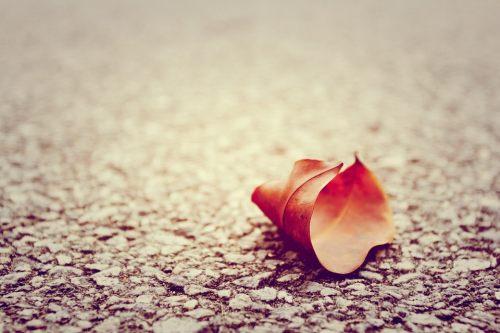 叶落不只在深秋