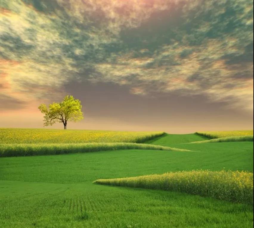 【优美散文】最好的心境是,顺其自然,随遇而安