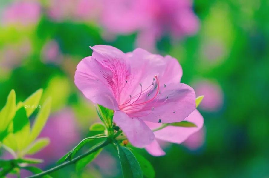 【抒情散文】陌上花,相思扣