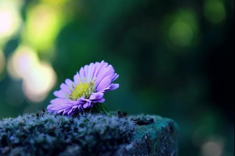 随遇而安,人生处处是风景