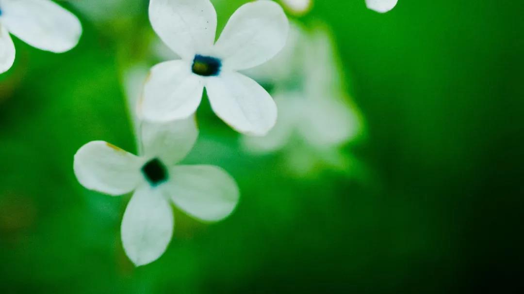 【感悟生活】幸福生活的十个条件
