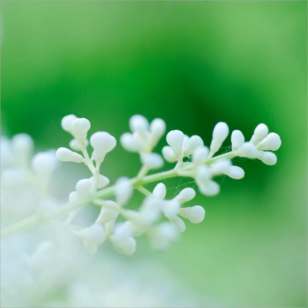 【抒情散文】开在时光深处的小野花